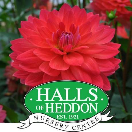 Halls of Heddon